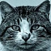 Tom Cat Print by Tony Grider