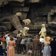 Tourists Watch Captive Polar Bears Print by B. Anthony Stewart