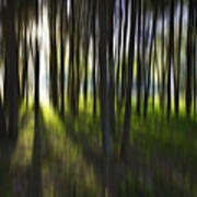 Tree Abstract Print by Avalon Fine Art Photography