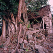 Tree And Ruins In Cozumel Print by Thomas Firak