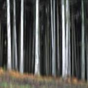 Trees Trunks Print by Bernard Jaubert