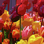Tulip Confusion Print by Sharon Talson