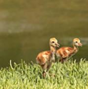 Two Chicks Print by Carol Groenen