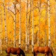 Two Horses In The Autumn Colors Print by James BO  Insogna