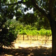 Vineyard View Print by Kim Pascu