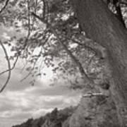 Walden Pond Print by Heather Weikel