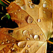 Water Drops Print by Liz Vernand