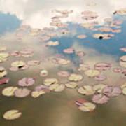 Water Lilies In Schoenbrunn Vienna Austria Print by Julia Hiebaum