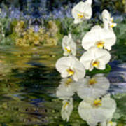 Water Orchid Print by Tom Romeo