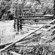 Weathered Fence Print by Larry Ricker
