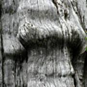 Western Red Cedar - Thuja Plicata - Olympic National Park Wa Print by Christine Till