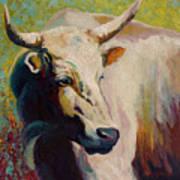 White Bull Portrait Print by Marion Rose