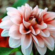 White Red Flower Print by Jame Hayes