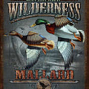 Wilderness Mallard Print by JQ Licensing