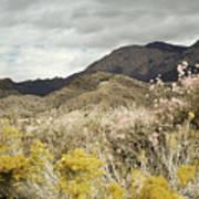 Wildflower Mountain Print by Andrea Hazel Ihlefeld