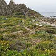 Wildflowers At China Rock - Pebble Beach - California Print by Brendan Reals