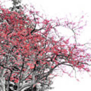 Winter Berries Print by Scott Hovind