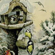 Winter Bird Table With Blue Tits Print by Carl Donner