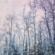 Winter Forest Print by Priska Wettstein