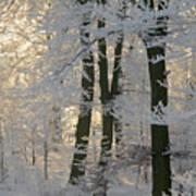Winter Sun Print by Odd Jeppesen