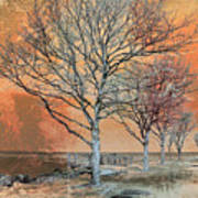 Winter's Dawn Print by Shawna Rowe
