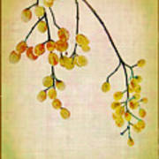 Yellow Berries Print by Judi Bagwell