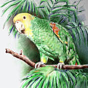 Yellow-headed Amazon Parrot Print by Arline Wagner