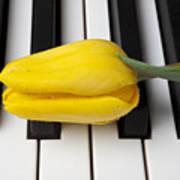 Yellow Tulip On Piano Keys Print by Garry Gay