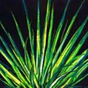 Yucca Print by Melvin Moon