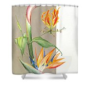 Bird Of Paradise 09 Elena Yakubovich Shower Curtain by Elena Yakubovich