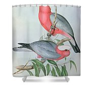 Birds Of Asia Shower Curtain by John Gould