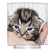 Kitten in a Hand Shower Curtain by Susan Leggett