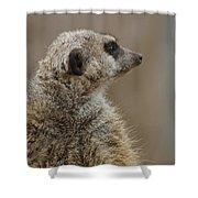 Meerkat Shower Curtain by Ernie Echols
