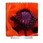 Orange Poppy Shower Curtain by Kathleen Struckle