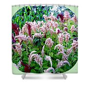 Amaranth Shower Curtain by Will Borden