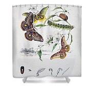 Australian Butterflies Shower Curtain by Philip Ralley