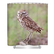 Burrowing Owl Shower Curtain by Kim Hojnacki
