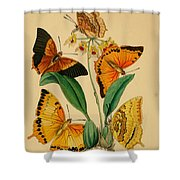 Chinese Butterflies 1847 Shower Curtain by Philip Ralley