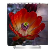 Claret Cup Cactus Shower Curtain by Saija  Lehtonen
