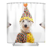 Clowning Around Shower Curtain by Edward Fielding