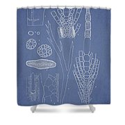 Desmarestia ligulata Shower Curtain by Aged Pixel
