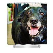 Dog 4 Shower Curtain by Naomi Burgess