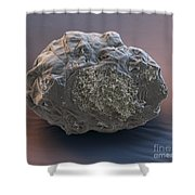 Dormant Water Bear Shower Curtain by Eye of Science and Science Source