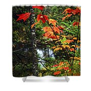 Fall Forest And River Shower Curtain by Elena Elisseeva