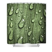 Green Leaf Abstract With Raindrops Shower Curtain by Elena Elisseeva
