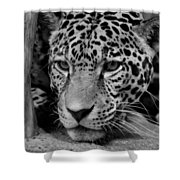 Jaguar in Black and White II Shower Curtain by Sandy Keeton