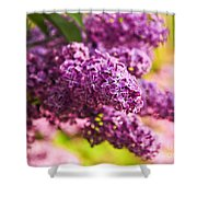 Lilacs Shower Curtain by Elena Elisseeva