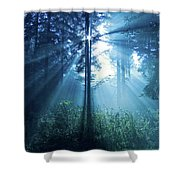 Magical Light Shower Curtain by Daniel Csoka