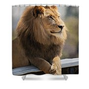 Majestic Lion Shower Curtain by Sharon Foster