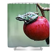 Pacific Tree Frog On A Crab Apple Shower Curtain by David Nunuk